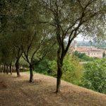 Colli Euganei - Hotel Terme Orvieto Abano