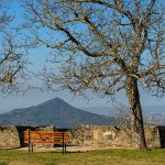 Panchina+alberi Min